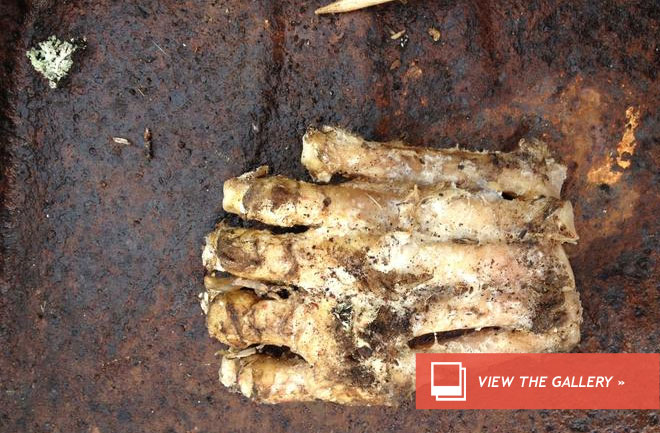 dnews-files-2013-04-bigfoot-gallery-jpg