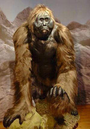 A Gigantopithecus model - is this the face of Bigfoot, the Yeti and other similar cryptids around the world
